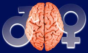 Male female brain differences